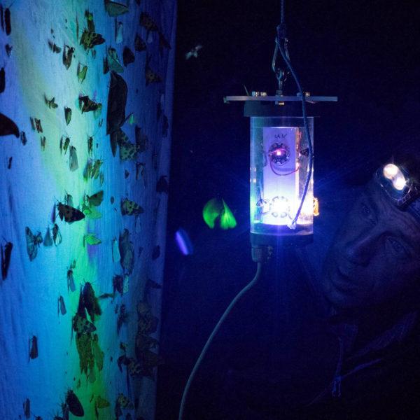 Artensterben: FSU-Studie über Fluginsekten und Lichtverschmutzung